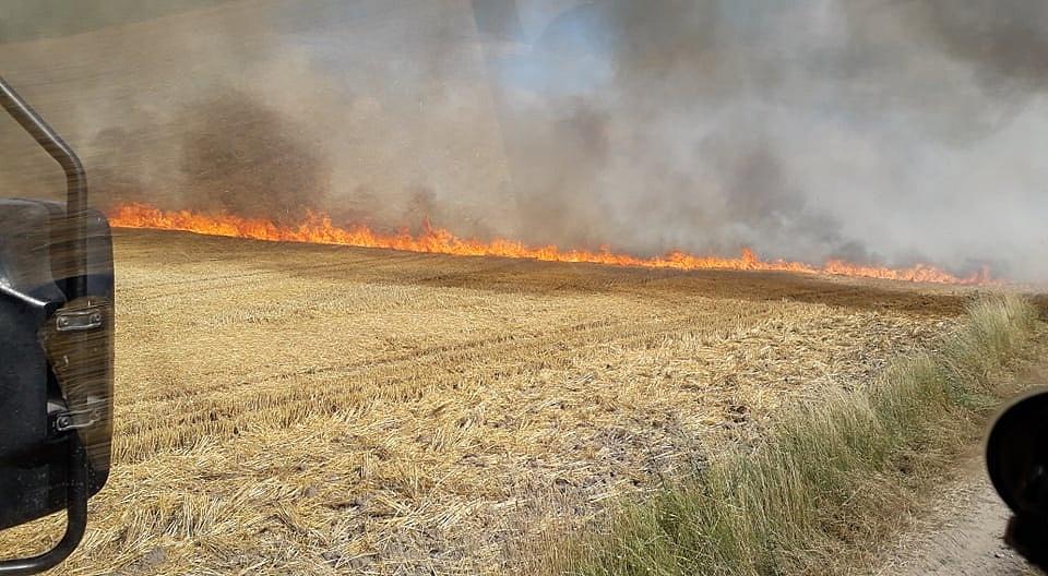 Pożar ścierniska, zboża i przyczepy w Niechanowie