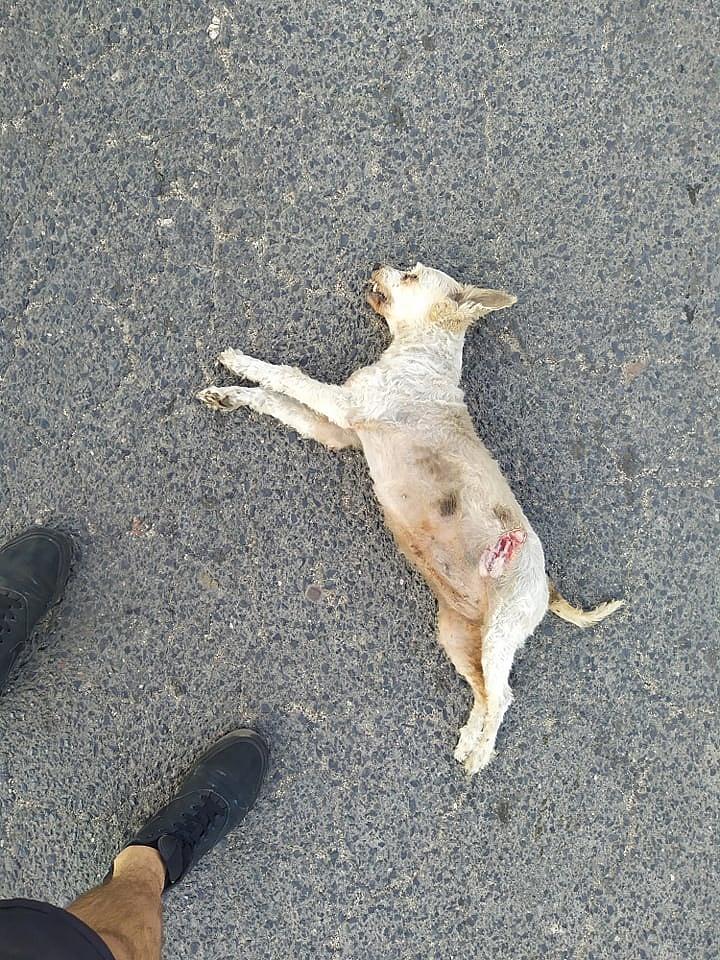 Śmiertelnie potrącił psa i uciekł z miejsca zdarzenia
