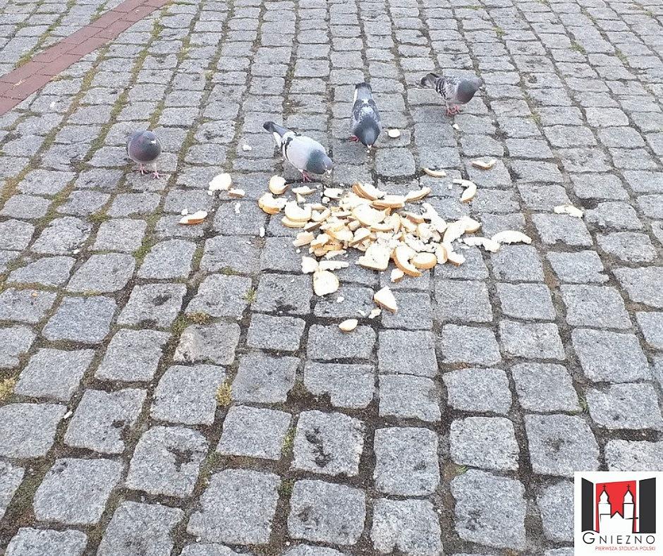 Dokarmiał ptaki - dostał mandat!