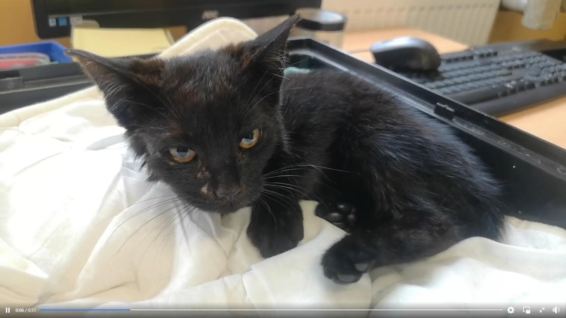 Okropna tragedia małego kotka! Trafił do sortowni odpadów!
