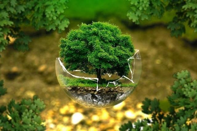 Drzewo dla szpitala - sadzimy drzewa dla przyszłych pokoleń